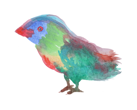 Watercolor bird on white background. Hand drawn illustration.