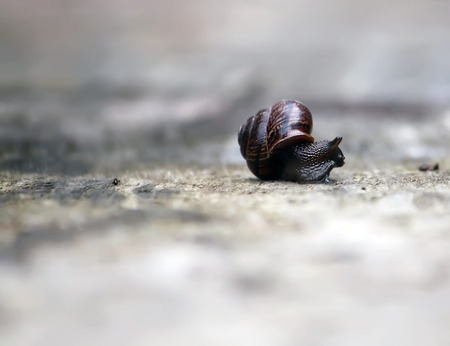Snail crawling on a wooden surface in the sunlight