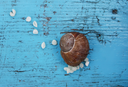 Snail laying her eggs on the wooden surface Stok Fotoğraf