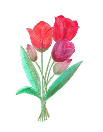 Watercolor painting. Tulip flowers. Stock Photo