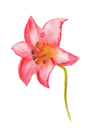 Watercolor flower. Hand painted illustration.