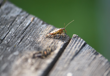 A little bittle on wooden surface in wild nature Stock Photo