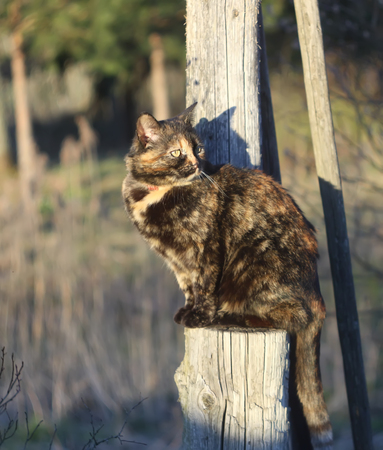 A cat in the rural yard at spring.