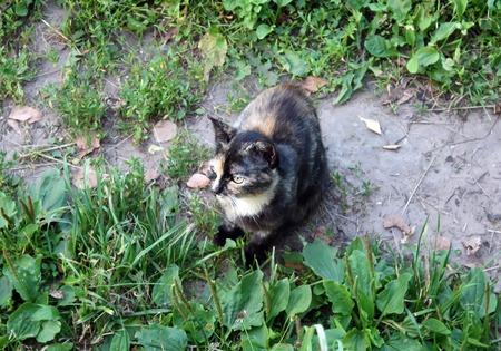 A cat hunting in the rural yard at spring.