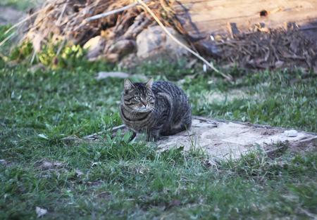 봄 농촌 마당에 고양이입니다. 스톡 콘텐츠