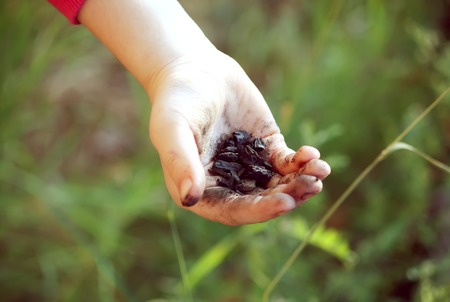 Childs hand holding black coal outdoors Stock Photo