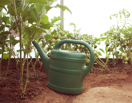 Green watering can in the geenhouse with vegetables.