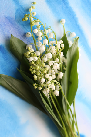 Lilies of the valley on a blue watercolor background Stock Photo