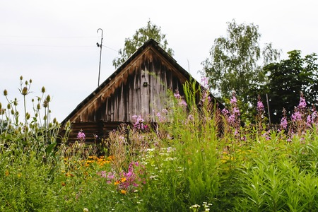 Scenic shot of the old barn buildings and summer blooming wildflowers in Latvia, East Europe.