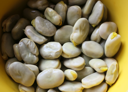 A close up of fresh broad beans in a yellow cup.. Stock Photo