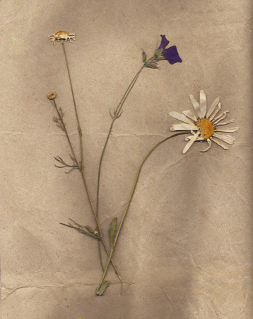 encyclopedic: Old dried plants. Homemade herbarium page. Wild dry pressed leaf on old paper texture. Stock Photo
