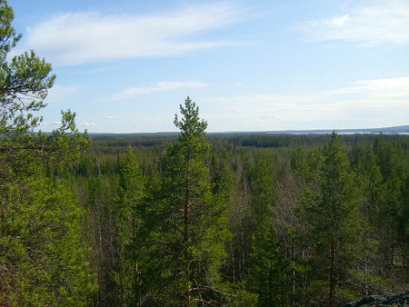 Landscape with green spruce forest in Finland, top view. Stock Photo