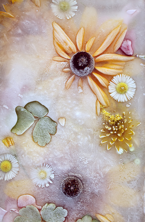 Ice cube with flowers close up. Natural frozen floral background.