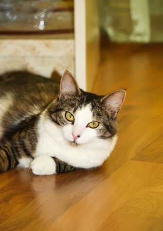 Young cat on the floor Stock Photo