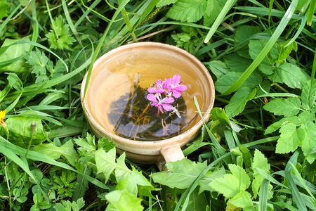 Natural herbal tea with medical fireweed fresh purple flowers and leaves in ceramic cup on green summer grass.