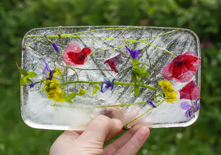 Ice cube with different summer flowers on green grass at summer. Stock Photo
