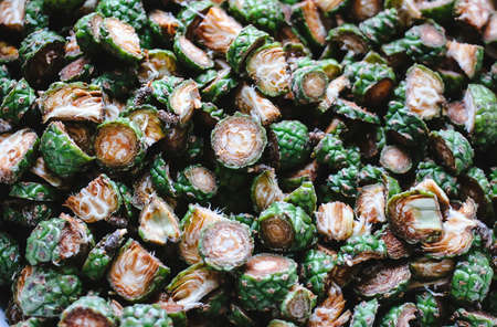 Green young sliced fir tree cones prepared for homemade syrup cooking. Stock Photo