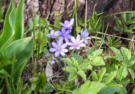Spring purple wildflowers Stock Photo