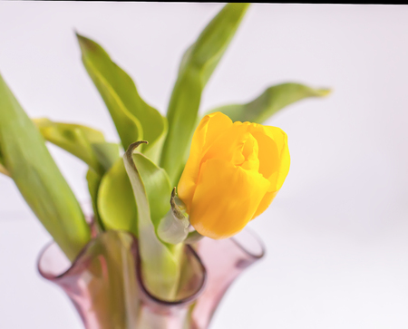 A bouquet of spring yellow tulip flowers.