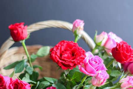Beautiful pink and red roses in a basket. Stock Photo