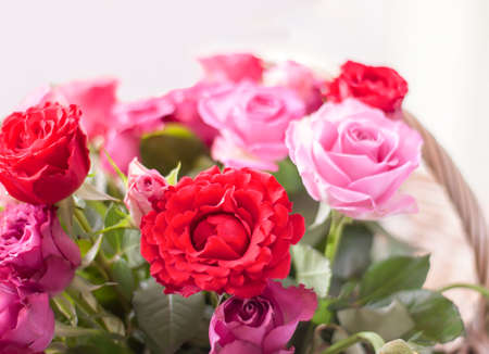 Beautiful pink and red roses in a wicker basket. Stock Photo