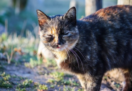 Domestic pet multiclored young active cat in sunlight in spring park. Stock Photo