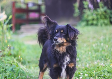 Young active dog in rural yard Stock Photo