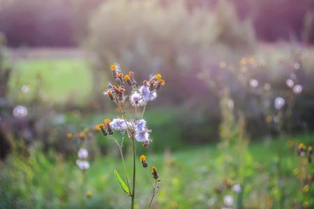 Wild flowers growing in summer meadow.