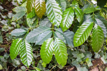 Tropical leaves. Exotic plants. Green natural background. Details of nature. Reklamní fotografie