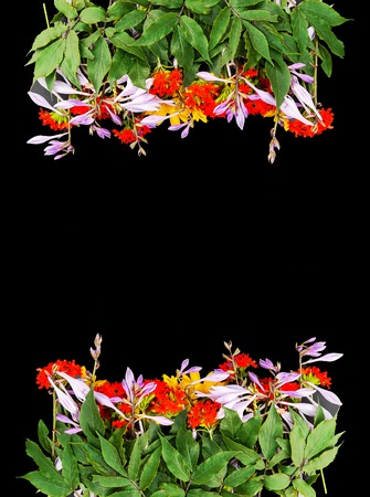 Frame of fresh bright summer flowers on black background. Festive floral template. Greeting card design. Top view. Stock Photo