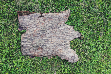 Piece of tree bark with rough natural texture on green grass.