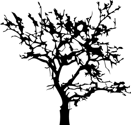 Bare autumn tree black silhouette isolated on white