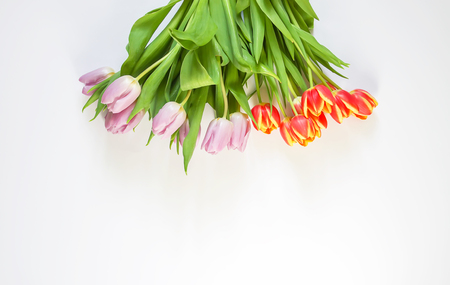 Spring beautiful tulip flowers on white background. Mother's day, greeting card festive decorative floral composition.