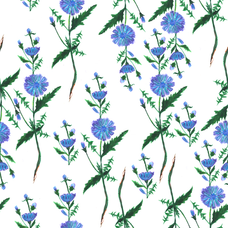 Seamless pattern. Decorative floral background. Watercolor illustration of blue cichorium flowers. Hand painted botanical element. Stock Photo