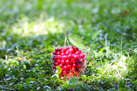 Ripe cherries in transparent glass cup on green grass background. Fresh wet red cherry fruits in summer garden in the countryside