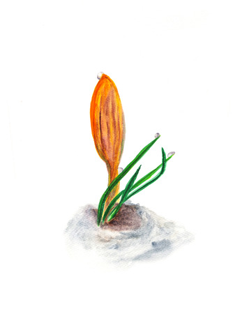 Watercolor illustration of crocus spring yellow flower. Botanical hand painted design element.