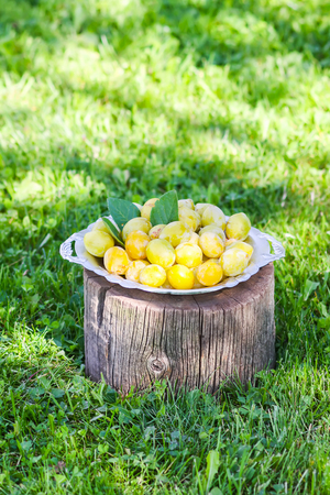 Fresh yellow plums. Ripe fruits in a plate on tree stump. Stok Fotoğraf
