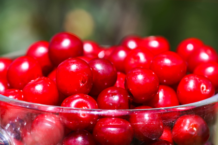 Ripe cherries in a transparent glass cup close up. Fresh red cherry fruits in summer garden in the countryside