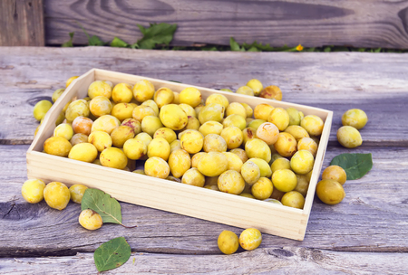 Fresh yellow plums. Ripe fruits in a wooden box on rough boards background outdoors. Stok Fotoğraf
