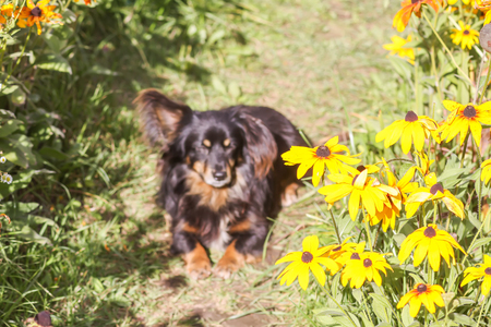 Happy and active mongrel mixed-breed dog outdoors in the grass on a sunny summer day Фото со стока