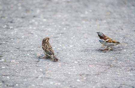 Two beautiful little sparrow bird outdoors