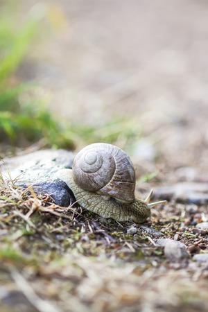 Snail crawling in summer day in garden.