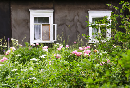 Beautiful spring peony flowers on rural wooden window Stock Photo - 122772739