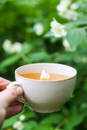 Glass cup of green tea with jasmine flowers in a hand on blooming bush