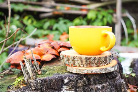 Still life with cup of tea on the round wood slices on tree stump and fall leaves in autumn garden. 免版税图像