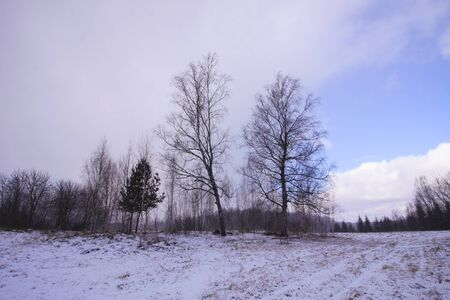 Winter nature background. Landscape in countryside.