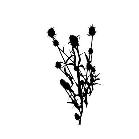 Black teasel plant silhouette isolated on white background. Vector illustration. Botanical element. Vettoriali