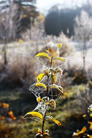 First frost in autumn park. Early morning in november. Wet branches and leaves in rime 스톡 콘텐츠