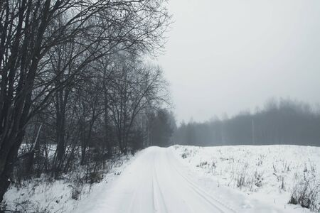 Beautiful winter landscape with trees in snow in countryside 写真素材