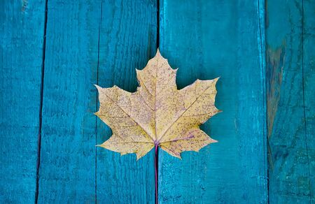 Bright yellow maple leaf on wooden surface.